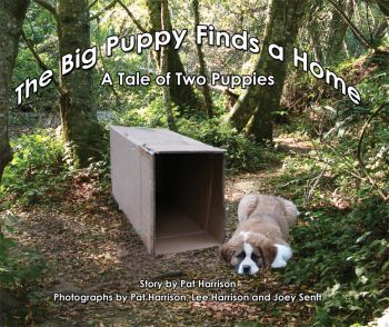The Big Puppy Finds a Home