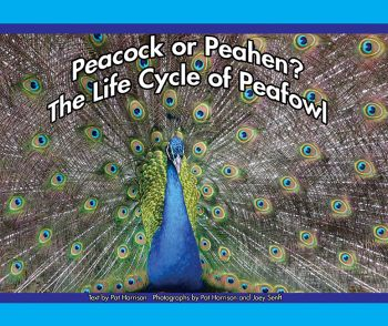 Peacock or Peahen? The Life Cycle of Peafowl