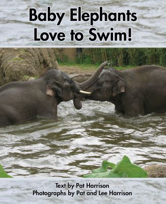Baby Elephants Love to Swim!