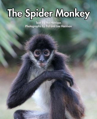 The Spider Monkey